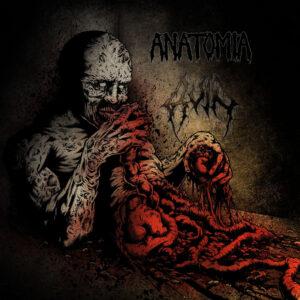 ANATOMIA / RUIN split LP